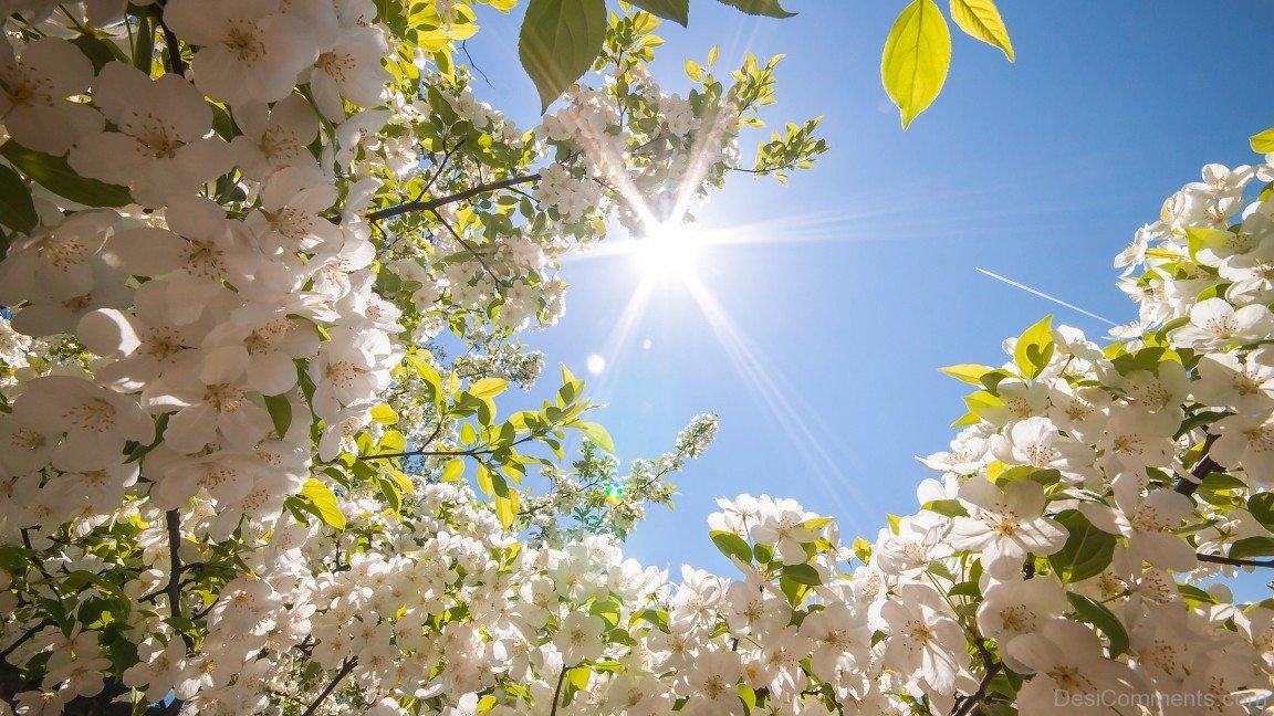 Wonderful-Photo-Of-Spring