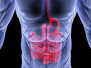 Gastrol2